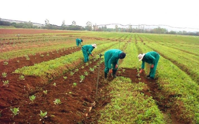 Ghana in need of US $40m to fill the financial gap in the agricultural sector- FAO