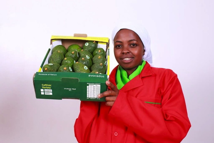 Mauritius lifts ban on Kenyan avocadoes
