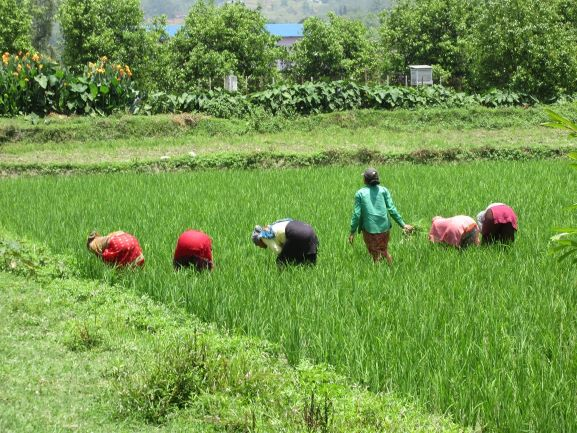 New CASA programme to benefit 565,000 smallholders in Uganda, Malawi and Nepal