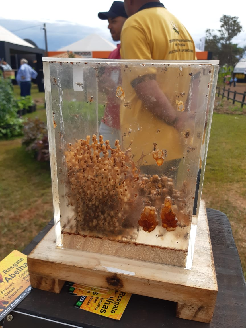 Brazil boasts about 300 species of stingless bees