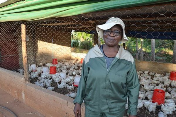 Jobs fund assists Sekororo farmers to find markets for their produce