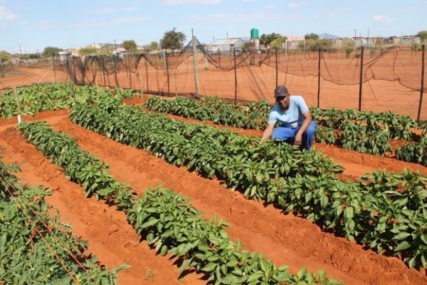 Lephalale farmers receive financial assistance from the jobs funds ,to create jobs