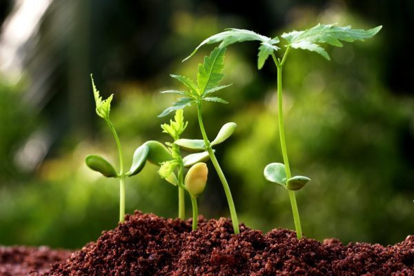 Agricultural Biotechnology Market should reach $53.7 billion in 2022 By TMR