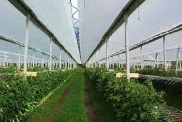 Protection Fabrics in Agriculture and Horticulture
