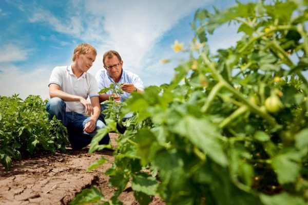 Bayer provides produce growers with holistic approach to field challenges during first ever Agriculture and Innovation Showcase
