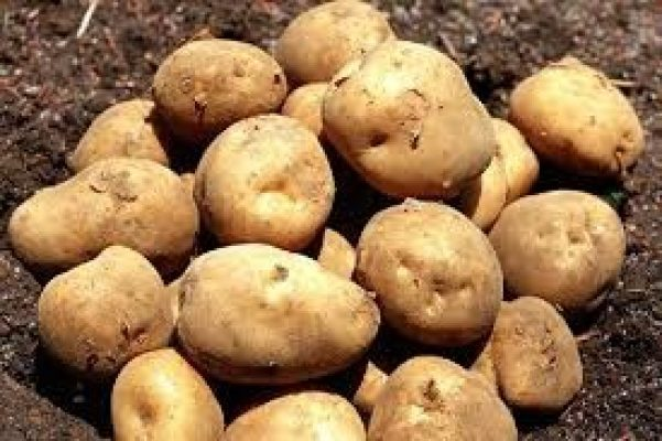 Selenium-Rich Agricultural Products Market Promising Growth Opportunities over 2015-2025
