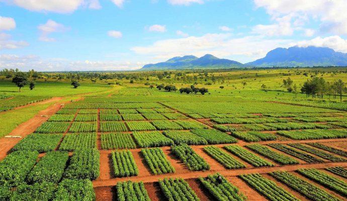 '$10bn to feed 10 billion by 2050', CABI tells AGRF