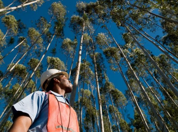 Forestry South Africa launches new infographic for Arbor Month