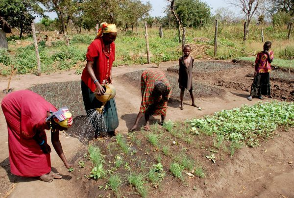 Sudan and IFAD to help smallholder farmers adapt to climate change and manage natural resources