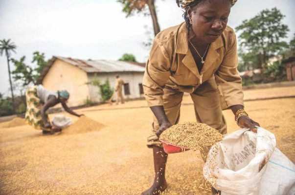 Sierra Leone and IFAD to strengthen partnerships, agricultural value chains and rural finance