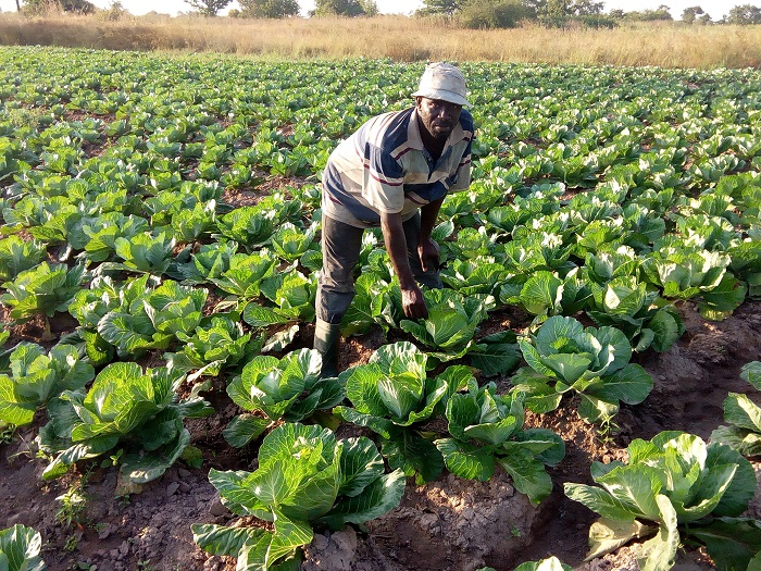 GCB Bank invests US $66m in Ghana's agricultural sector