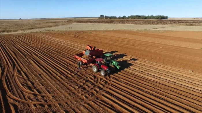 A rate cut, downside inflation outlook and supportive rand boost agriculture rebound