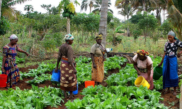 Nigerian government urged to make provisions in the agribusiness sector for NYFN's participation