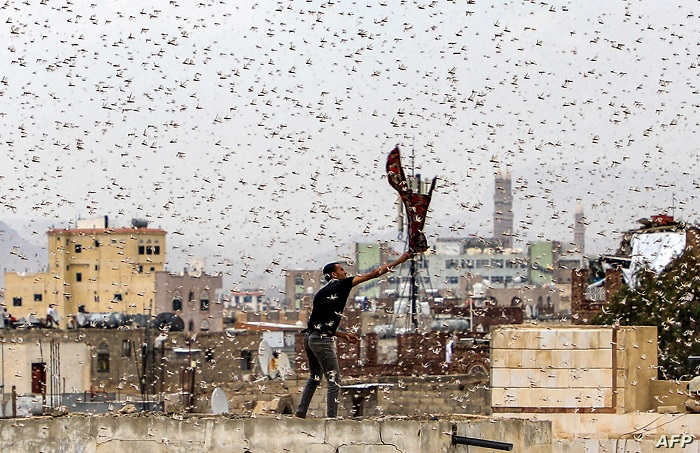 Ethiopia deploys helicopters to spray new swarms of desert locusts