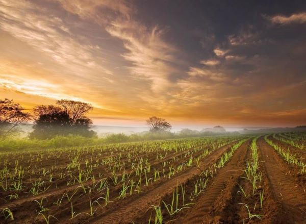FNB and RMB heed the call to improve food security in Mpumalanga
