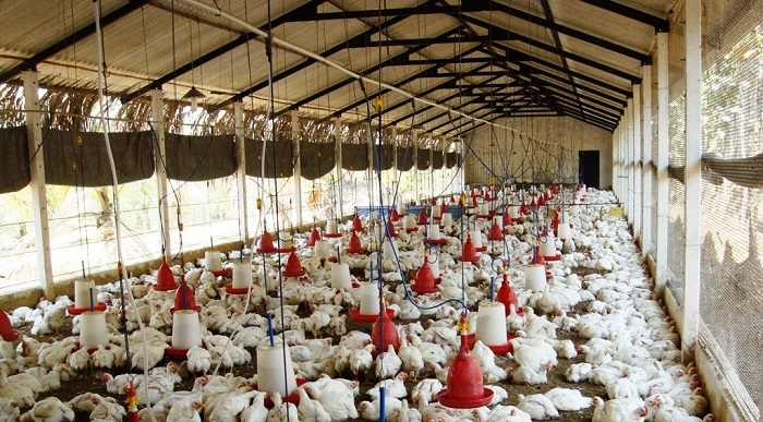KZNPI Chicken House gives SA students access to latest farming technology