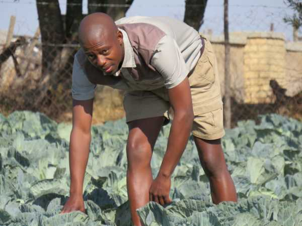 Education is key to improving the African agribusiness