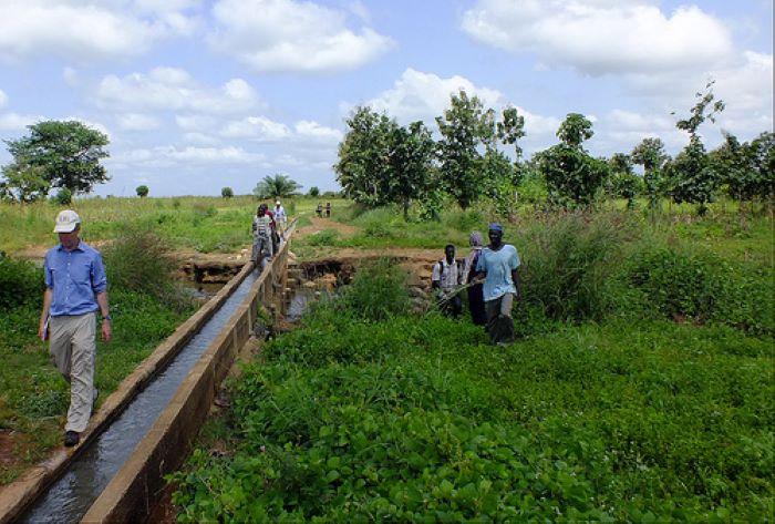 Irrigated fodder crops help Ethiopian women improve dairy value chain