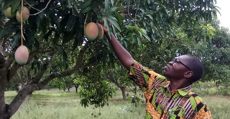 The Consumption of Mangoes in Europe is Rising Despite Difficulties in Sourcing