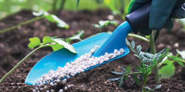 The Africa Fertilizer Financing Mechanism, OCP Africa team up to increase access to fertilizers in Côte d'Ivoire and Ghana