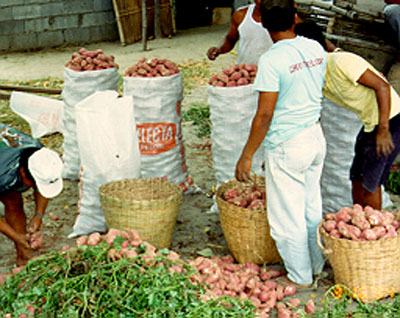 Post-harvest practices that increase farmer revenue and sales