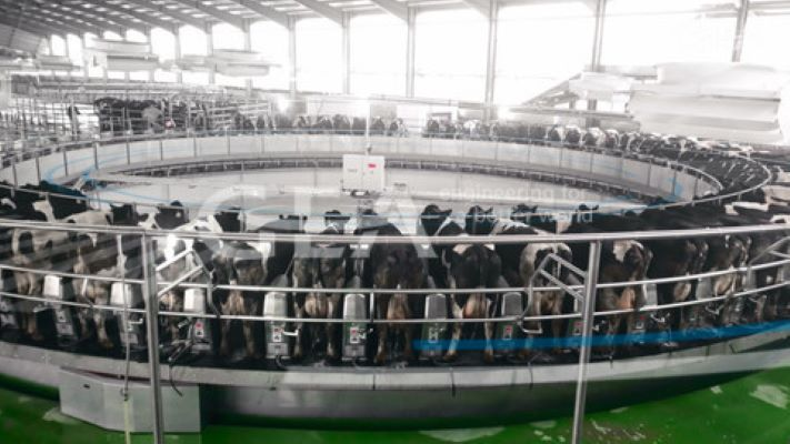 GEA installed largest milking rotary parlor in China for 10,000 cows
