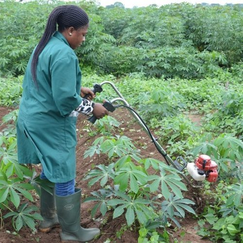 Kenya, AfDB commits US $18m to engage youth in agribusiness