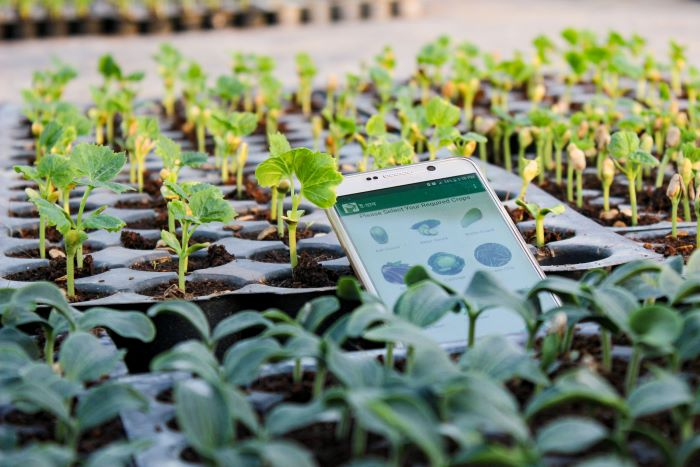 IBM offers digital training to agriculture start-ups through its D4Ag initiative