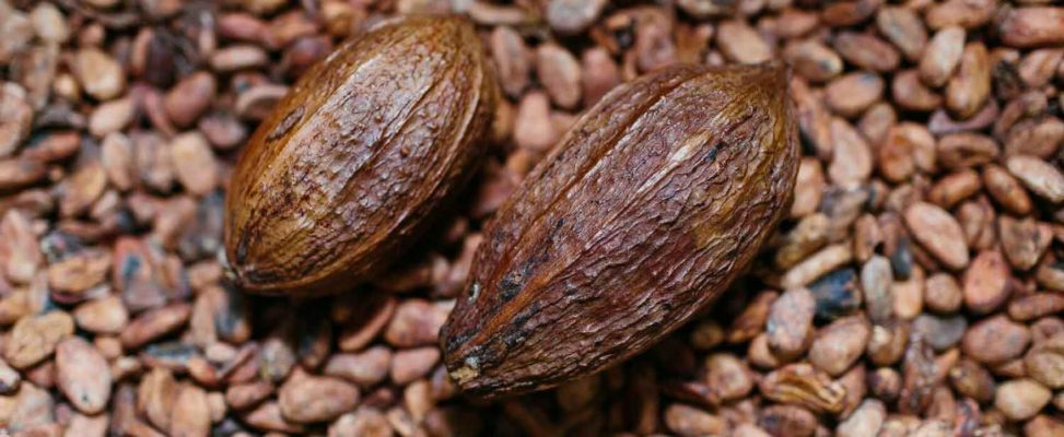 African Development Bank's Adaptation Benefits Mechanism helps to climate-proof Ivorian smallholder farms' cocoa yields