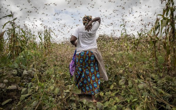 Artificial Intelligence Helping African Farmers in the Fight Against Locusts