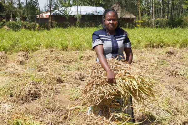 Kenyan agriculture entrepreneurs bet on diversification, networking to weather COVID-19 shocks, study