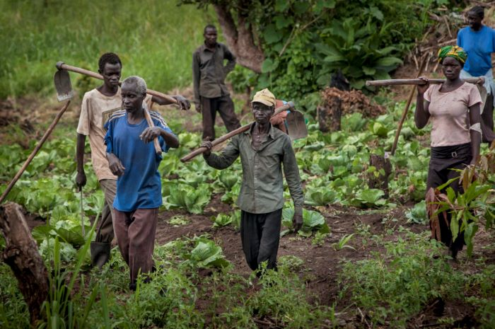AfDB signs agreement with South Sudan for a US $14m agriculture boost grant