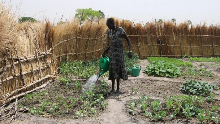 African Development Bank, FAO and South Sudan's government ink protocols for $14 million grant to boost agricultural markets