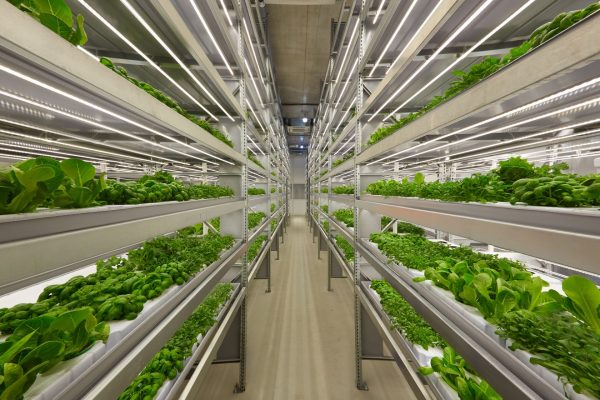 Farm In A Box: The Ultimate Guide To Container Farming