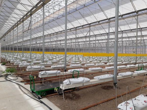 Agricultural company increases tomato production by 14% thanks to technology investment