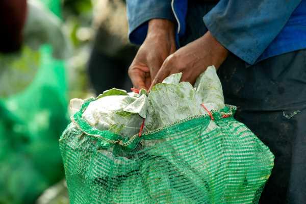 Standard Bank's OneFarm Share platform provides over 1 million meals for food relief, targets 30 million in 2021