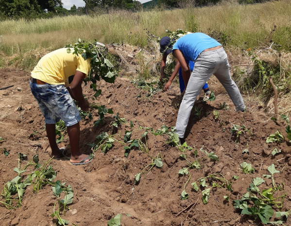AAC targets 10 million smallholder farmers and agribusiness startups