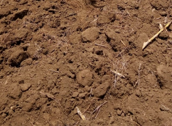 Soil health is the world's health and farmers' wealth