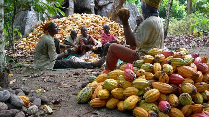 Nigeria in position to export US $3Bn in Cocoa derivatives to AfCFTA