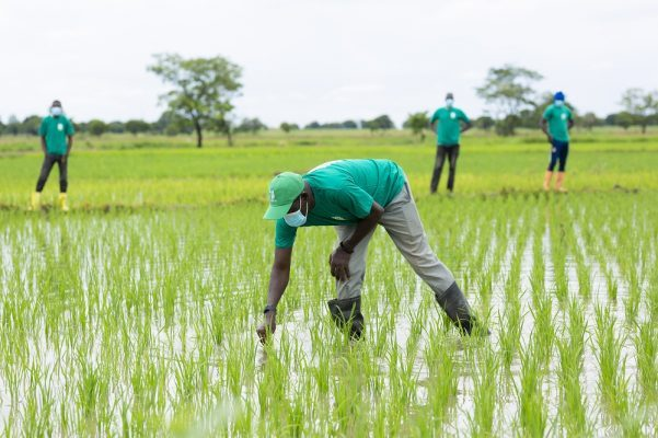 The Arab Africa Trade Bridges Program (AATB) Extends its Support for OCP Africa's Agribooster Program in Côte d'Ivoire