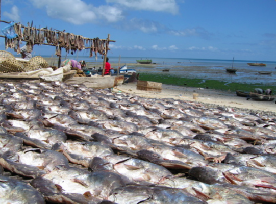 MIMAIP to collect over US $6m from fishing campaign in Mozambique