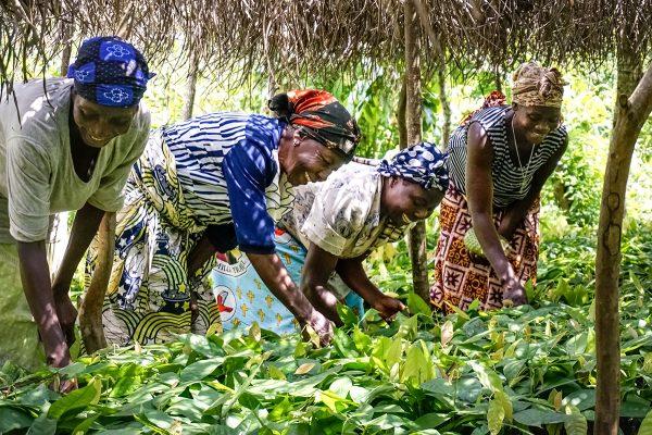 IFC, AfDB launch program to support women farmers in Côte d'Ivoire