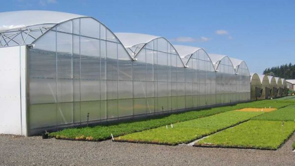 Italy to promote expertise in seeds greenhouse technology, irrigation in Ghana