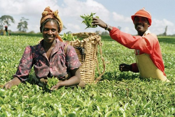 Nigeria awarded US $500,000 grant to boost Agriculture