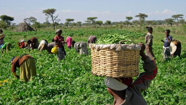 Farmforte, AFGEAN, HYBR, ALTS partner to boost agriculture in Nigeria