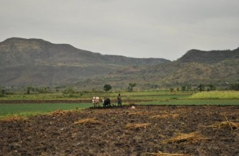 Israel –Ethiopia to work together to improve agriculture