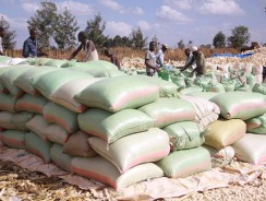 NCPB facing difficulties in selling imported maize