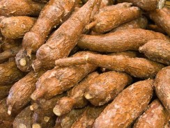 NISRAL urges African governments to upscale cassava production