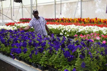 Kenya's local inspection of fertilizer imports causes increased costs of flowers