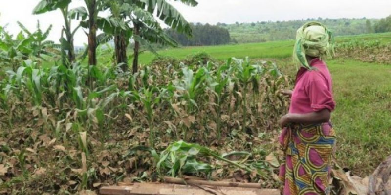 East African countries grapples with high food prices due to flooding, pests and disease